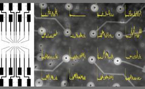16 Mikroelektroden im Zentrum des Chips
