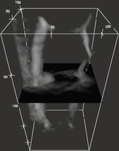 Neue Methode liefert 3D-Bilder über die Chemie der Zelle