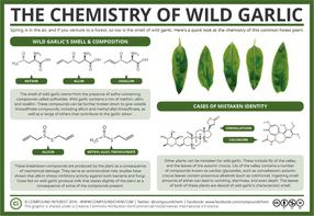 The Chemistry of Wild Garlic
