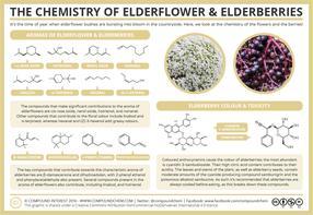 The Chemistry of Elderflowers & Elderberries - Aroma, Colour, & Toxicity