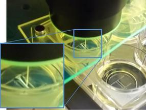Organ-on-a-chip mimics heart's biomechanical properties