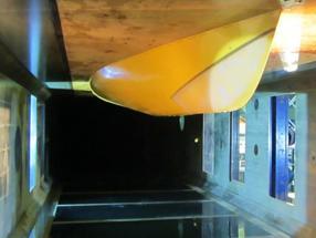Vorbild Delfinhaut: Elastisches Material vermindert Reibungswiderstand