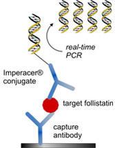 Chimera-Follistatin-Abb2