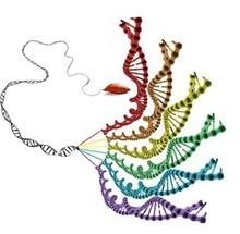 Die hexaploide Süßkartoffel hat ein Erbgut mit einem sechsfachen Chromosomensatz.
