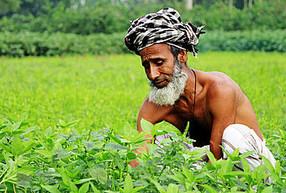 Jute-Bauer in Bangladesh