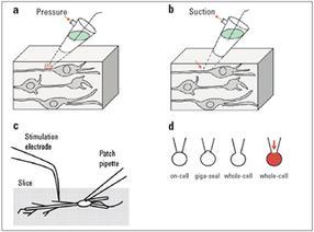 Leica-Elektrophysiologie-Abb1